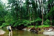 Trekking the lush forest of Anawangin